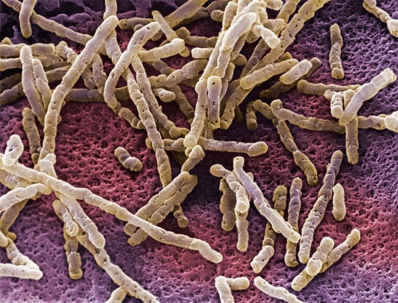 gut-microbes